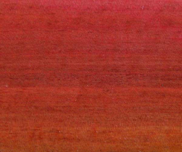 Pink Ivory - Berchemia Zeyheri