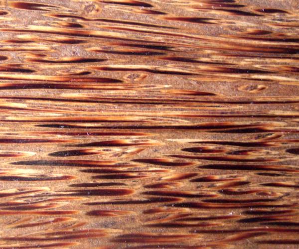 Red Palm - cocos nucifera (borassus flabellifer)