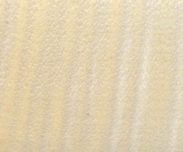 Riegelahorn - Acer Saccharum