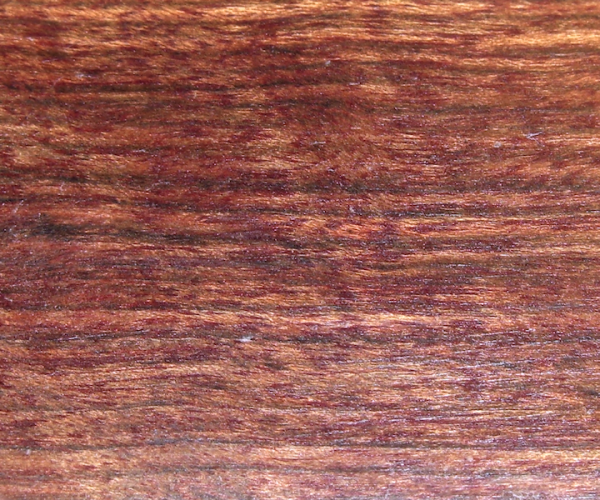 "Chechen ""Caribbean Rosewood"" - Metopium brownie"